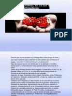Granado Cultivo Comercializacion (1)