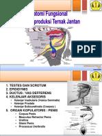 anatomi-fungsional-organ-reproduksi-ternak-jantan.pdf