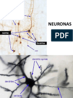 Usmp Practica - Histologia 2018- Tejido Nervioso