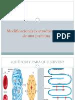 Modificaciones postraduccionales de una proteina