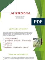 Los Artropodos Hecho Por Aramis