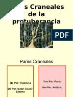 Bases Farmaologicas 2