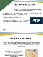 Ayuda 4 Psicobiologia de La Sexualidad