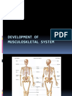 21125_Embryology Muscularskeletal System