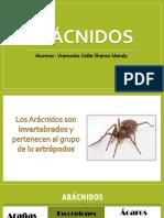 Aracnidos
