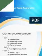Otot Regio Antebrachii
