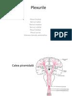 Curs 3-Recuperare in Boli Neurologice