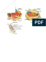 Estrutura das células