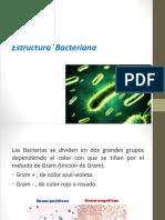 4) Estructura y Morfologia Bacteriana