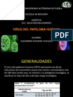 Hb Papiloma Humano