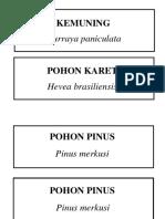 Nama Latin