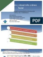 Crecimiento y Desarrollo Cráneo Facial. ORTO DOC. VIRY