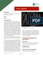Taenia saginata.pdf