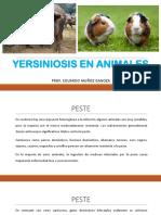2016-Yersiniosis en Animales