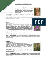 Plantas Nativas Del Extranjero
