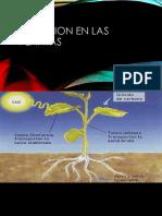 Nutricion en Las Plantas
