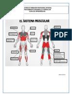 Guia_de_Aprendizaje musculos karina.pdf
