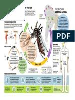 Virus Dengue, Zika y Chikungunya