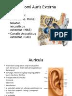 anatomi telinga luar
