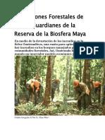 Concesiones Forestales de Petén