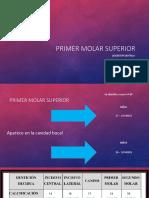 1er Molar Superior