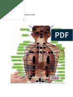 Puntos de Rastreo de Biomagnetismo Medico