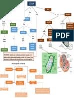 Mapa Conceptual Celula