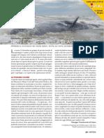 111spazio mare balene.pdf