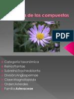 Compuestas - Botanica