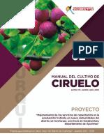 CIRUELO