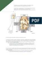 La articulación del codo presenta una estructura compleja
