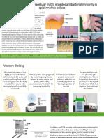 Impaired Lymphoid Extracellular Matrix Impedes Antibacterial Immunity In