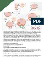 Immunity.pdf