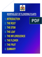 morphology of flowering plants.pdf