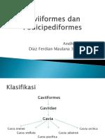 Kelompok 3_Gaviiformes dan Podicipediformes_Biologi B2016.pptx
