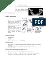 Schistosomiasis Fact Sheet