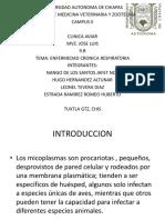 Mycoplasma Aves