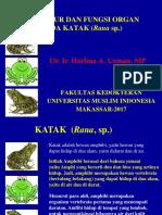 367622581-Struktur-Dan-Fungsi-Organ-Katak.pptx