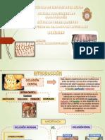 Tema 8 Oclusion Dentaria