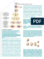 taller deciencias naturales grado sexto mitosis.docx