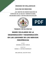 degeneracion y regeneracion de lesiones de nervios periféricos.pdf