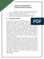 INFORME N° 2 DE MICROBOLOGIA EVELIN.docx