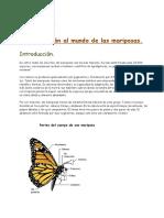 introduccinalmundodelasmariposas1-121009012650-phpapp01.pdf