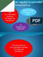 Factores Que Regulan La Actividad Fotosintetica (1)