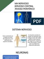 Sistema Nervioso Final