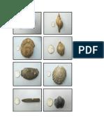 Sampel Gambar Molusca