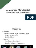 morfologi sel