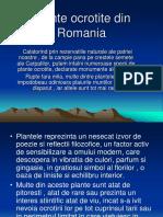 Plante Ocrotite Din Romania
