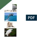 Gambar Animal Madan