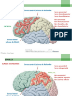 anatomia fisuras